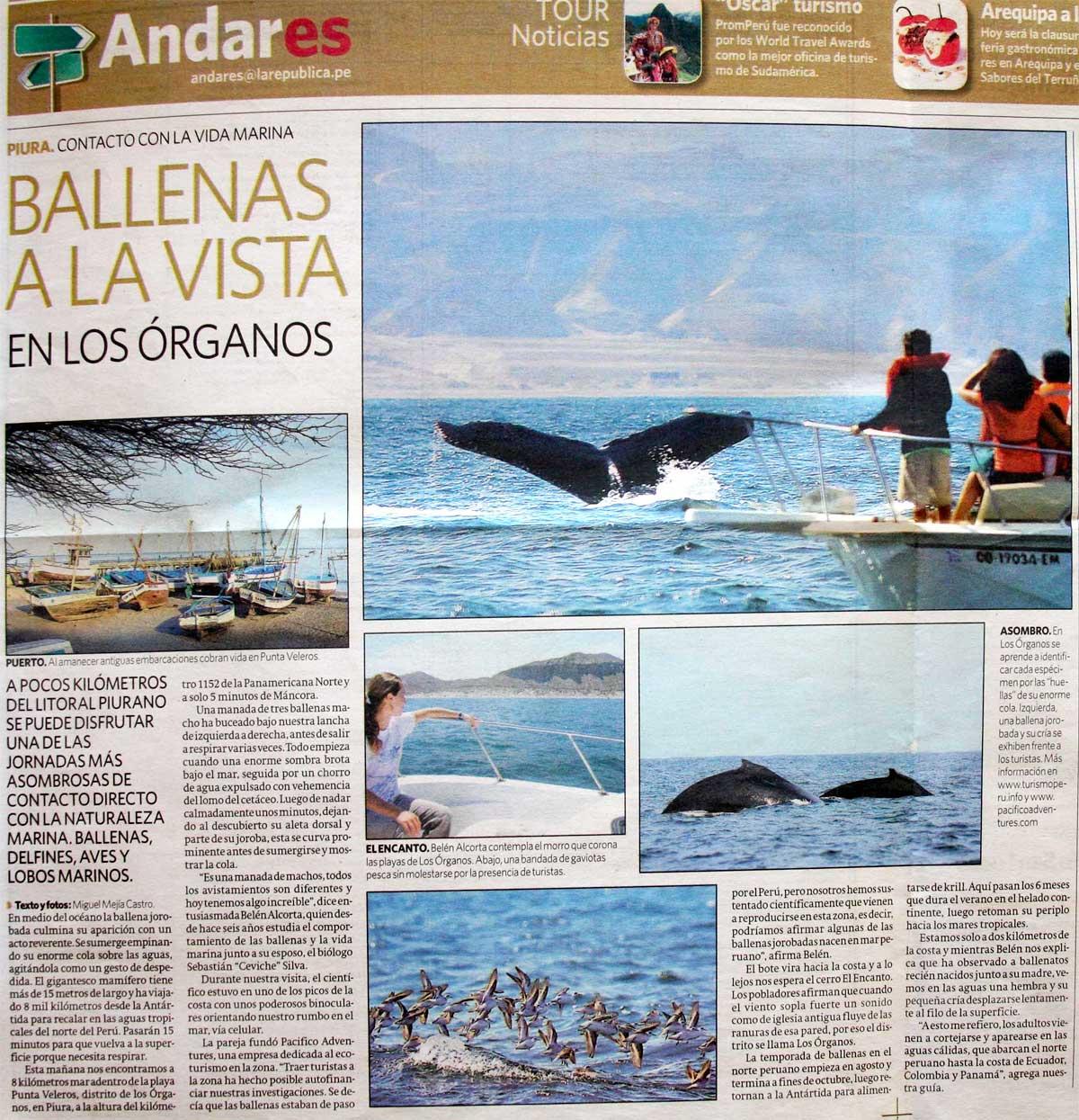 Ballenas a la vista en Los Organos. | Pacifico Adventures